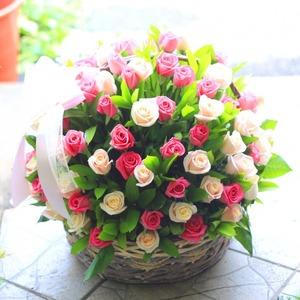 핑크혼합 100송이 + 노래꽃배달
